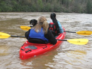 Bella the dog hitches a ride down the Coosawattee's shoals.