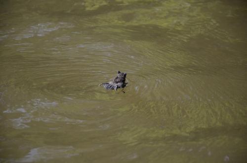 Swimming Bat