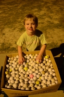 Kavin Toole inspects a box containing 1,160 golf balls the night after a golf ball collection contest. All were pulled from the river bottom in north Fulton County.