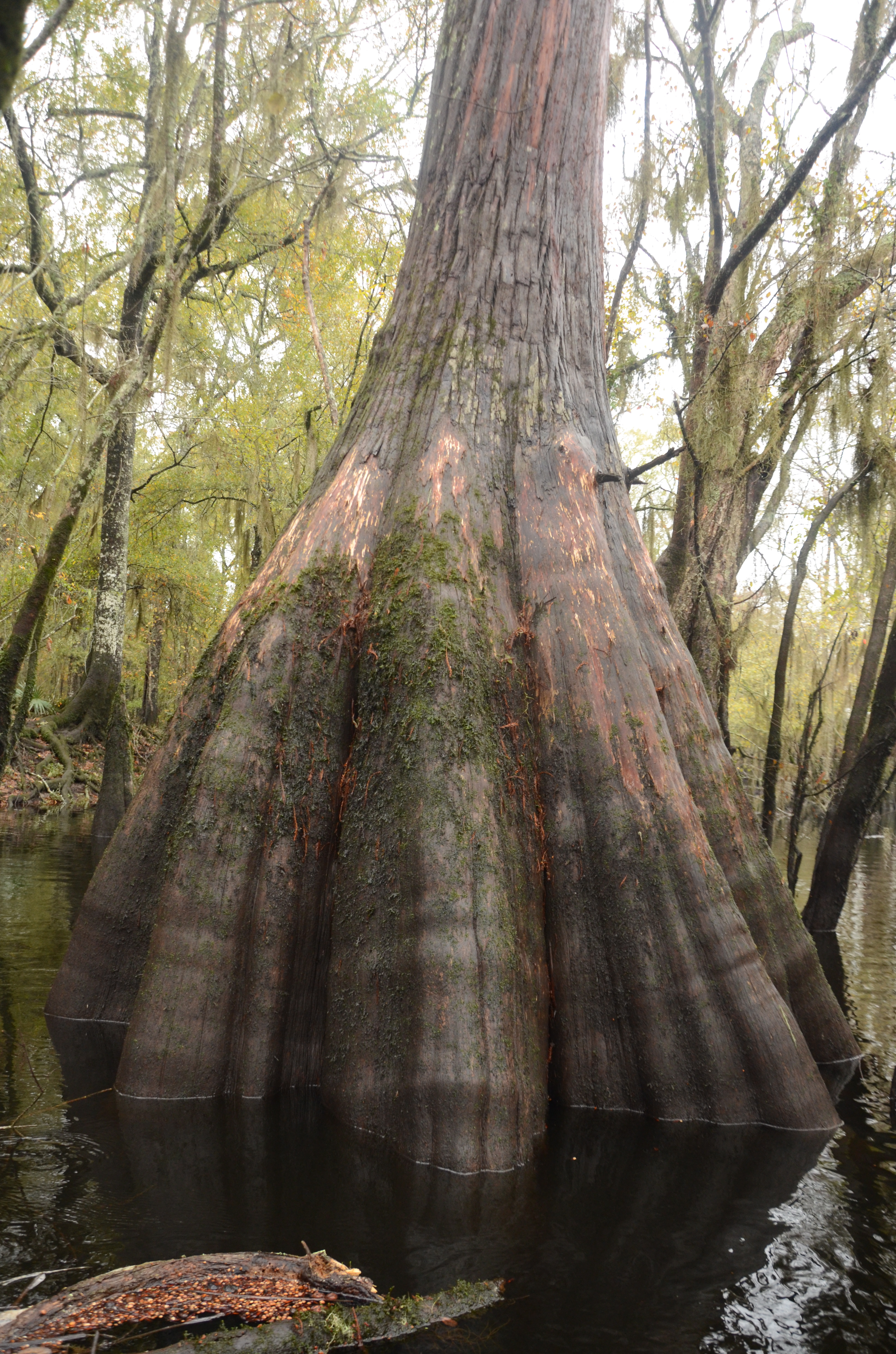 Ogeechee Adventure Reveals A Taste Of What S In Store For