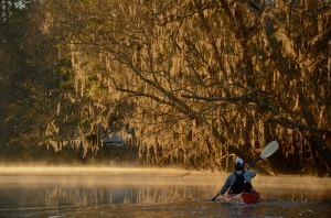Morning light catches a bank draped in Spanish moss on the Ogeechee River.