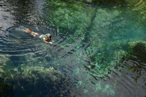 Gwyneth Moody explores one of the many blue hole springs that we ecperienced during four days on the Flint River from Albany to Bainbridge.